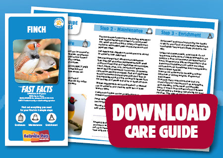 View Finch Care Guide