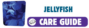 View Jellyfish care guide