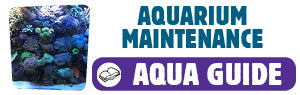Download Aquarium Maintenance Guide