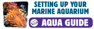 Download Setting Up Your Marine Aquarium