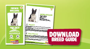 Download French Bulldog breed guide