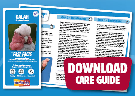 View Galah Care Guide