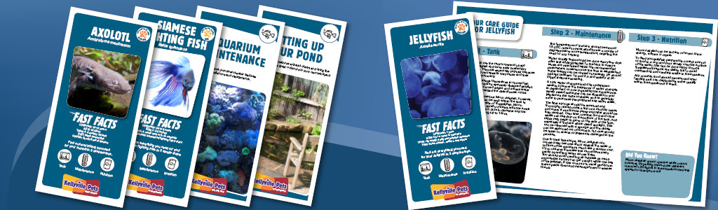 View all fish care guides here