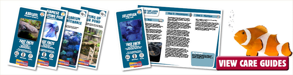 Aquarium care guides from Kellyville Pets help you look after your fish and tanks