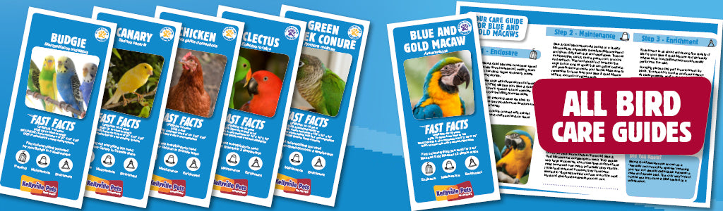 View All Bird Care Guides