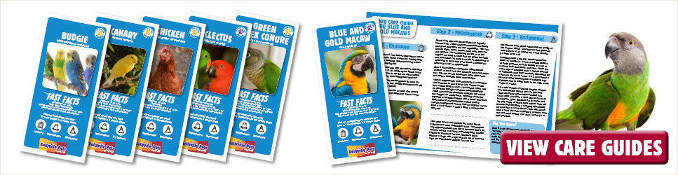 Kellyville Pets care guides for your pet bird