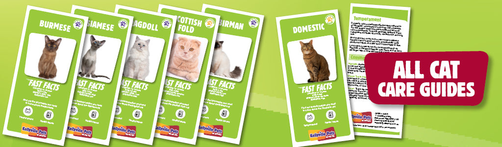 View Cat Care Guides
