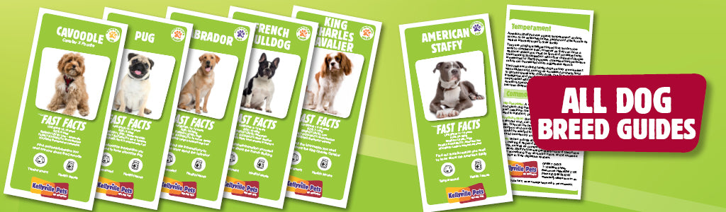 All Dog Breed Guides