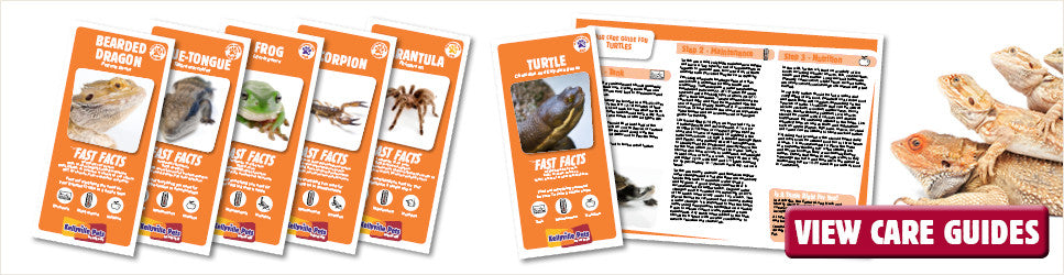 Care Guides for your reptile. View the range from Kellyville Pets here.