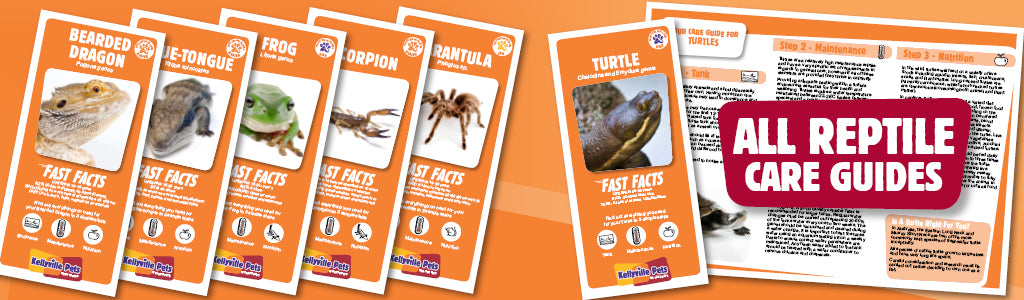 All reptile care guides