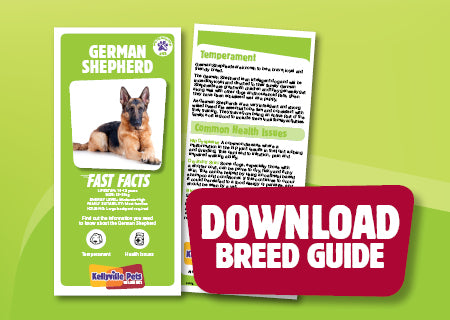 Download German Shepherd breed guide