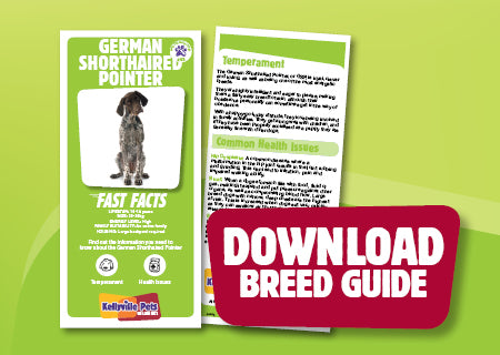 Download German Shorthaired Pointer breed guide