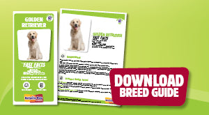 Download Golden Retriever breed guide