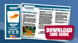Download Goldfish care guide