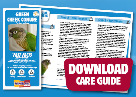 View Green Cheek Conure Care Guide
