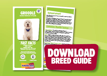 Download Groodle breed guide