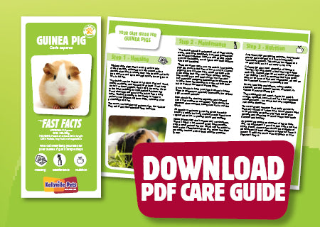 Download Guinea Pig PDF care guide