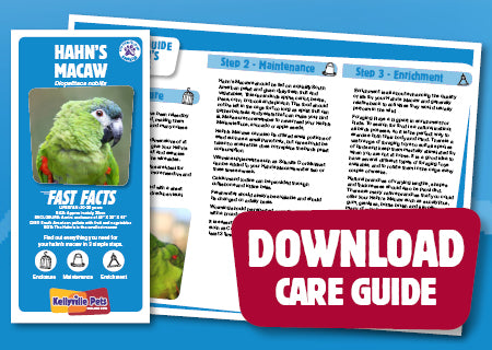 View Hahn's Macaw Care Guide