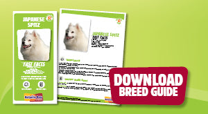 Download Japanese Spitz breed guide