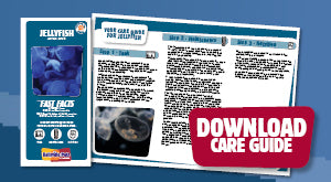 Download Jellyfish Care Guide