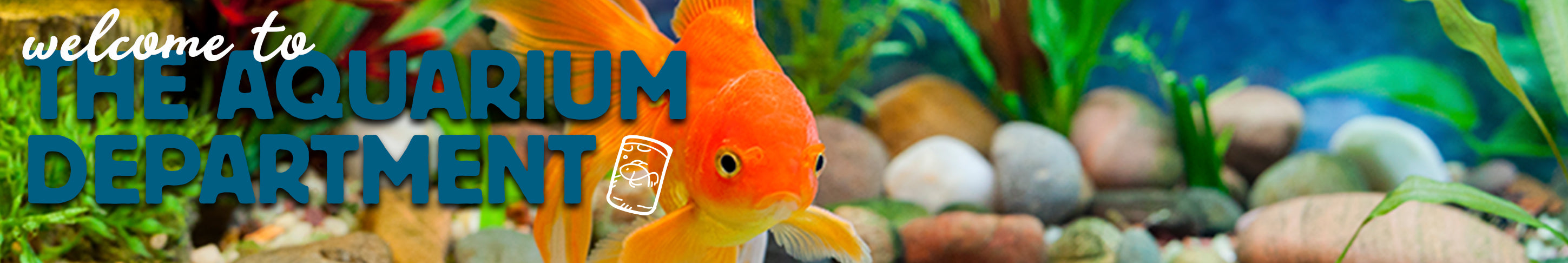Aquarium Department Fish For Sale Kellyville Pets