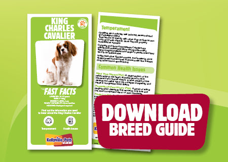 Download King Charles Cavalier breed guide