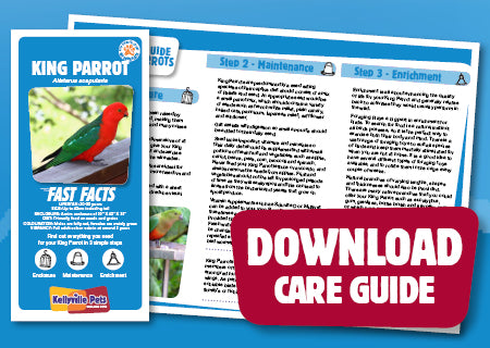 View King Parrot Care Guide