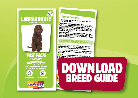 Download Labradoodle breed guide