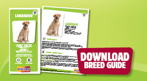 Download Labrador breed guide