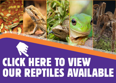 How To Look After A Frog Care Guide Kellyville Pets