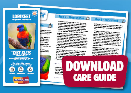 View Lorikeet Care Guide