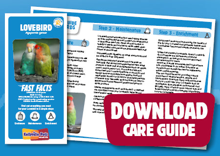 View Lovebird Care Guide