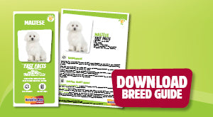 Download Maltese breed guide