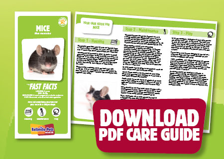 Download Mice PDF care guide