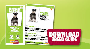 Download Miniature Schnauzer breed guide