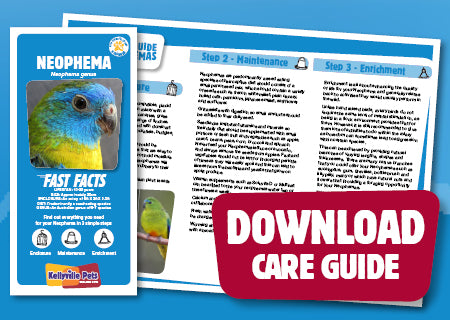 View Neophema Care Guide