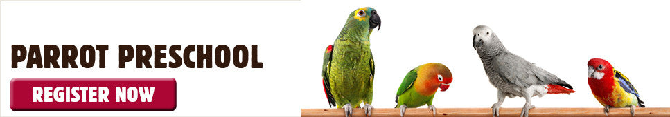 Parrot Preschool bird training at Kellyville Pets