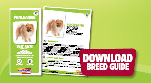 Download Pomeranian breed guide