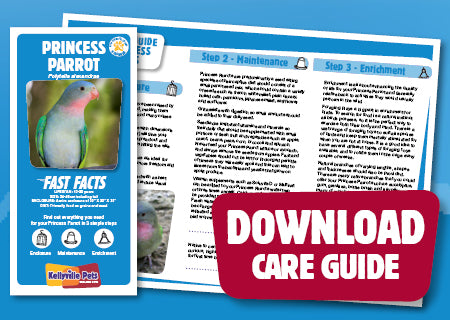 View Princess Parrot Care Guide