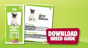 Download Pug breed guide