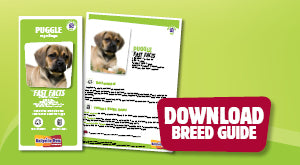 Download Puggle breed guide