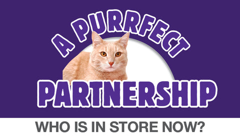 Adopt a rescue cat from AWL. See who is in store now.