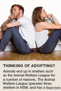 Thinking of Adopting?