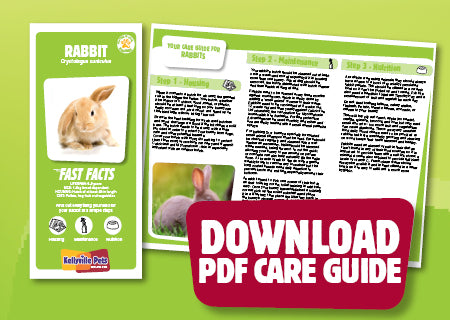 Download Rabbit PDF care guide