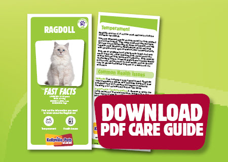 Download Ragdoll PDF care guide