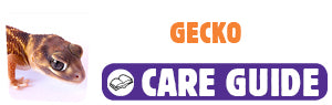 Click here to view Gecko care guide