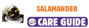 Click here to view Salamander care guide