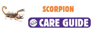 Click here to view Scorpion care guide