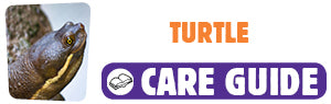 Click here to view Turtle care guide