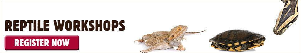 Reptile Workshops at Kellyville Pets